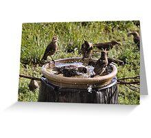 Community Bathing Greeting Card