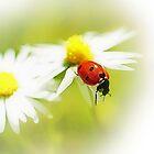 Ladybug by flashcompact
