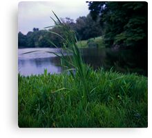 Reed at Willow Lake Canvas Print