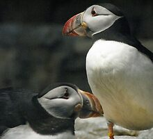penguin impersonators by Jay Fassett