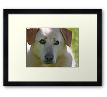 Bless Your Old Heart and Soul Jake - 1997-2010 Framed Print