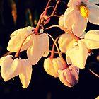 Bells-flowers by AkaiAkuma80