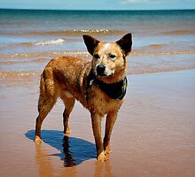 Oceanside Portrait by SamTheCowdog