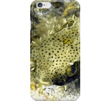 Bridled Golden Burrfish iPhone Case/Skin