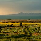 Bellarine Peninsula by Joe Mortelliti