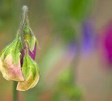Sweet Emergence by Sarah-fiona Helme
