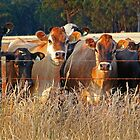 Moo,moo.moo,moo,moo,and moo. by Joe  Mortelliti