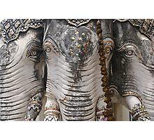 Elephant heads, Phetchaburi. Photographic Print
