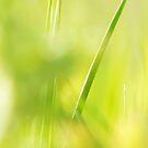 Green by satterflOw