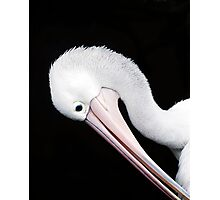 Curves - pelican portrait Photographic Print