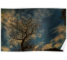 Half dead tree reaching for beautiful clouds Poster
