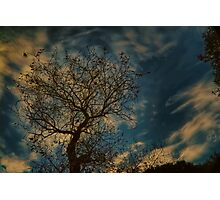 Half dead tree reaching for beautiful clouds Photographic Print