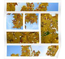 plantanus leaf collage - autumn Poster