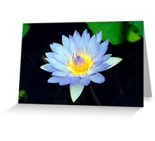 Blue - waterlilly Greeting Card