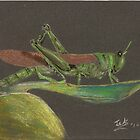 Grasshopper Green by snowhawk