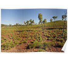 A Grassed Landscape of the Bungle Bungles Poster