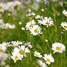 flower-pleasure by NordicBlackbird