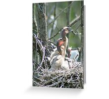 Young Double Breasted Cormorants Greeting Card