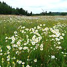 Summer Meadow at Lerdal by HELUA