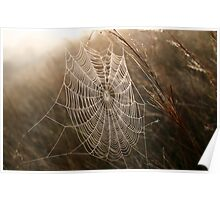 Morning Web Poster