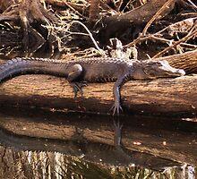 big log gator by jdadkin