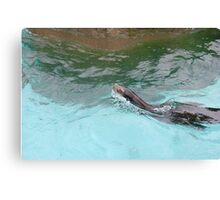 Magestic Sea Lion Canvas Print