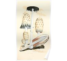 Coloured figures of English fungi or mushrooms James Sowerby 1809 0487 Poster