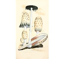 Coloured figures of English fungi or mushrooms James Sowerby 1809 0487 Photographic Print