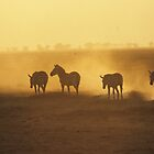 Zebras in the Sunset. by Bertspix1