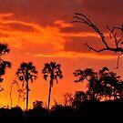Okavango Sunset by Sharon Bishop