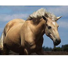 New Forest Pony Photographic Print