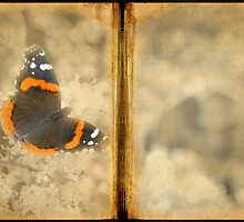 Red Admiral with Book Texture by Colleen Drew
