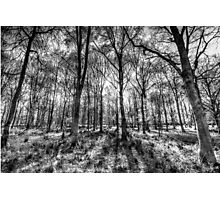 The Monochrome Forest Photographic Print