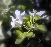 apple blossoms #6 by Dawna Morton