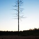 On the Trail of the Lonesome Pine by Sunnymede
