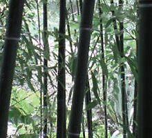 bambus 3 by Cincenetti