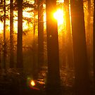 Sunlight through the trees by Sunnymede