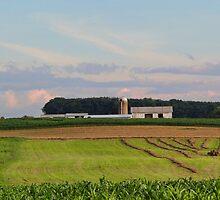 Summer Evening Beyond the Corn Field by vigor