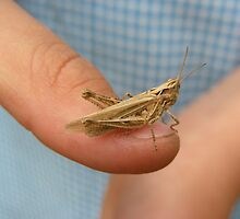 Grasshopper Finger Friend! by brittle1906