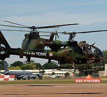Gazelle, French Army by DonMc