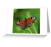 Beautiful Peacock butterfly Greeting Card