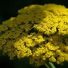 Upon The Bed Of Yellow by TriciaDanby