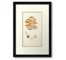 Coloured figures of English fungi or mushrooms James Sowerby 1809 0793 Framed Print