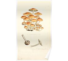 Coloured figures of English fungi or mushrooms James Sowerby 1809 0793 Poster