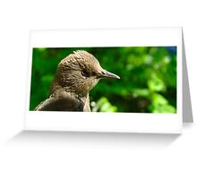 Starring Starling Greeting Card