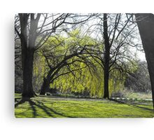 spring trees Canvas Print