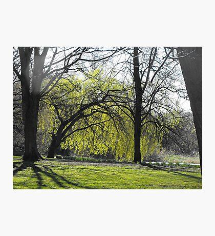 spring trees Photographic Print