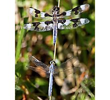 Eight-spotted Skimmer & Western pondhawk at Rest Photographic Print