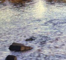 Sunrise Tide Pool Sticker