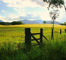 Farm gate by Kym Howard
